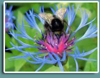 Краса Подільської Землі. Флора та фауна