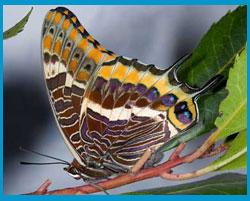 Прочитати загадкового метелика